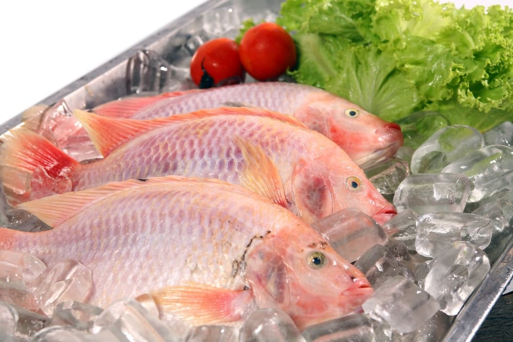 How to tell if snapper is fresh