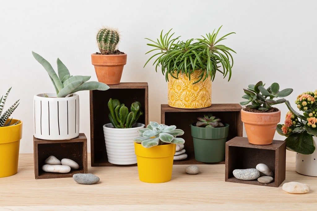 Terracotta Pots for Cooking