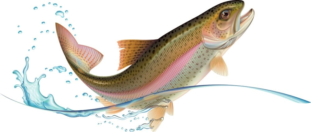 What Does Rainbow Trout Taste Like