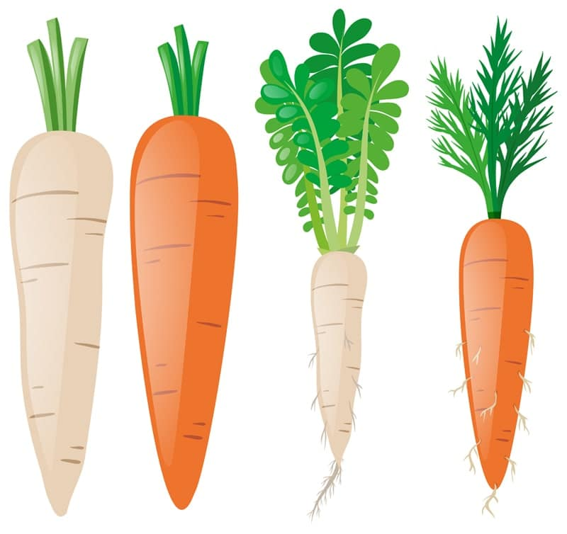 brief history of carrots