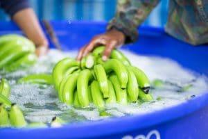 green banana lime bath